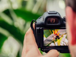 Reseñas de las mejores cámaras DSLR de 2019