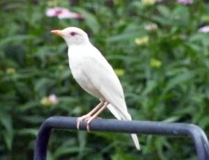 Backyard Birding Gran Impacto -Por qué nuestro pasatiempo es tan importante!