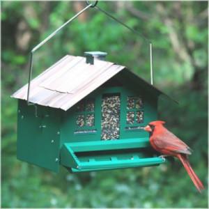 Alimentadores y fijadores para observar aves en su patio trasero