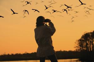 Comunidades de observación de aves - Descubra lo que está sucediendo en su nido local.