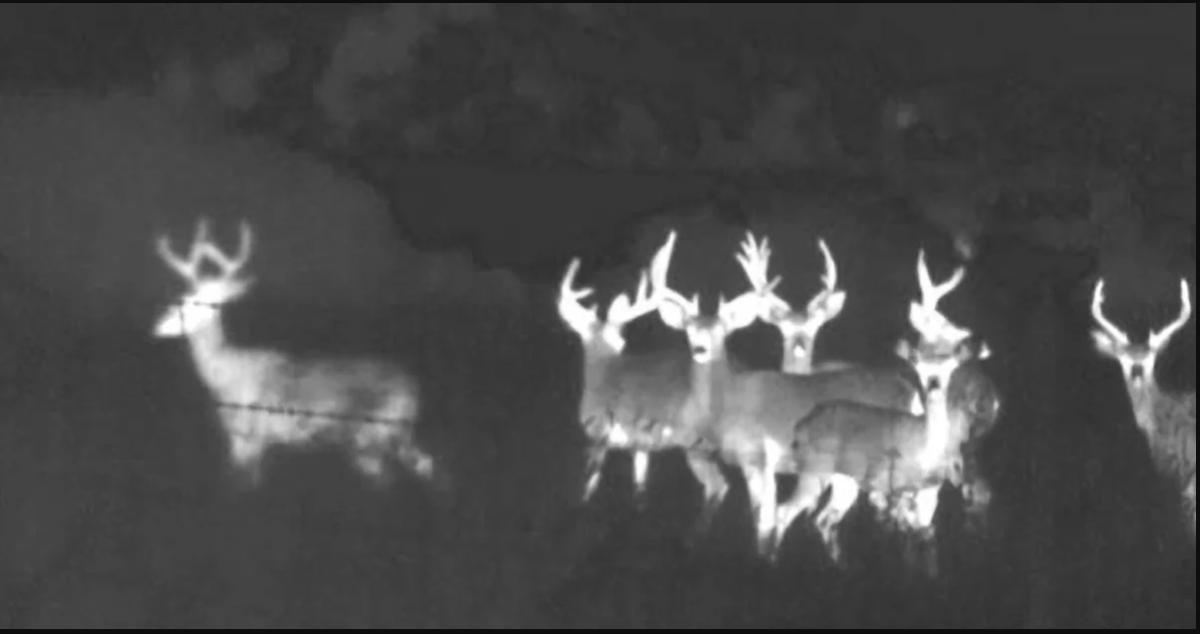 Cómo funciona la visión nocturna en la óptica de caza